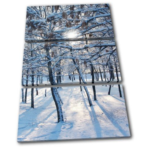 Snow Forest Landscapes - 13-1191(00B)-TR32-PO